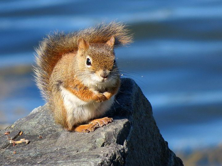 Squirrel standing on a rock posing for a photograph