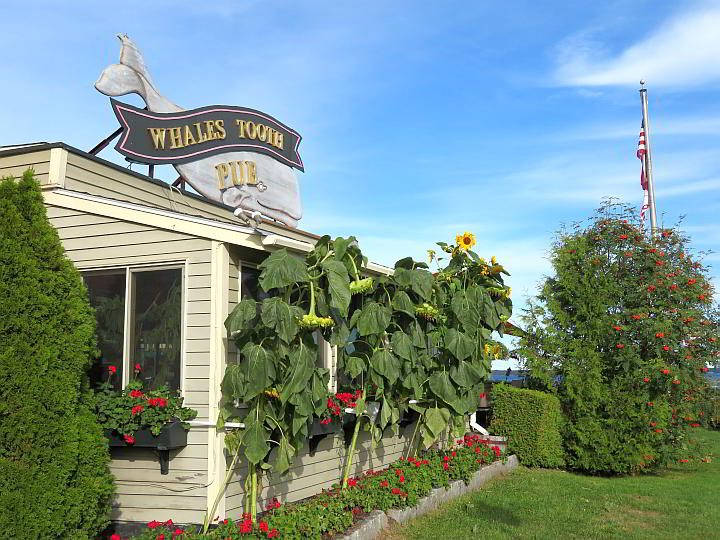 Whale's Tooth Pub in Lincolnville Maine offers a waterfront dining experience