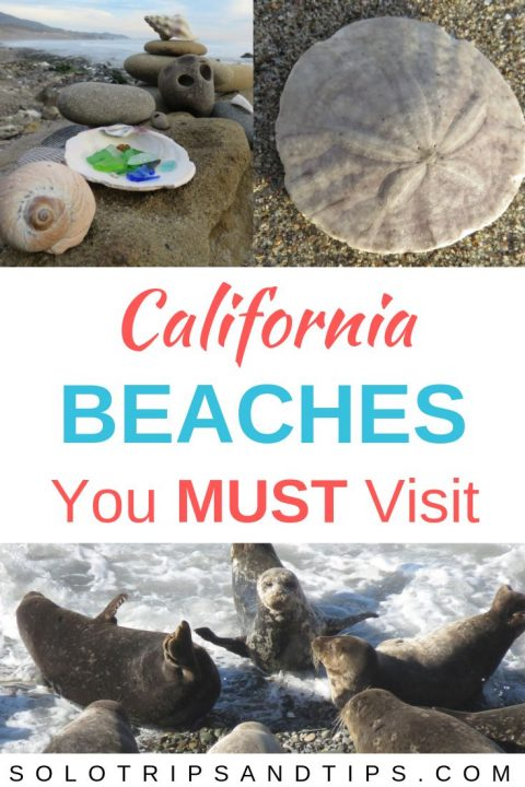 California beaches you must visit for beach glass, sand dollars, and harbor seals