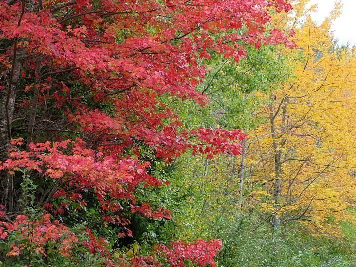 Fall colors on the New England coast - red, green, and brilliant yellow leaves