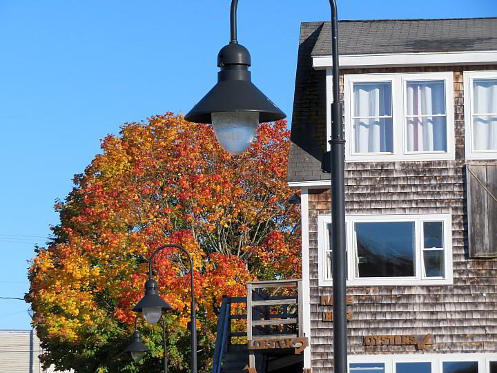 Fall foliage in Belfast Maine looks brilliant against the blue sky and a weathered building