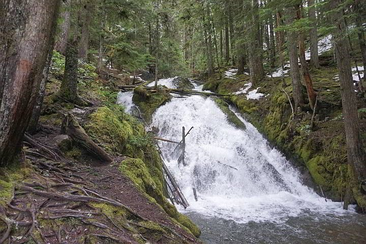 Little Zigzag Falls is a cool and kid friendly easy hike at Mt Hood National Forest in Oregon