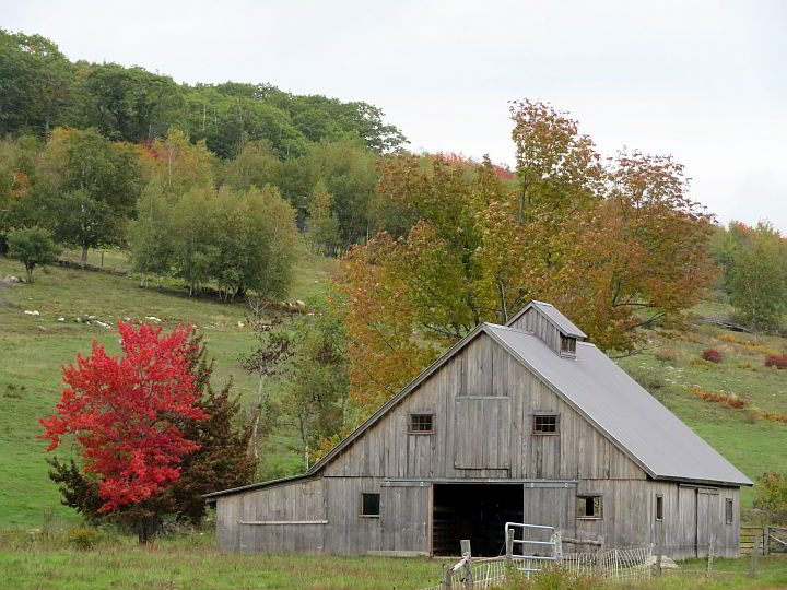 Maine road trip in fall, sighting of a weathered barn and a tree with bright red leaves