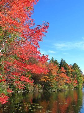 New England fall means the leaves start changing to bright colors of yellow, orange, and red