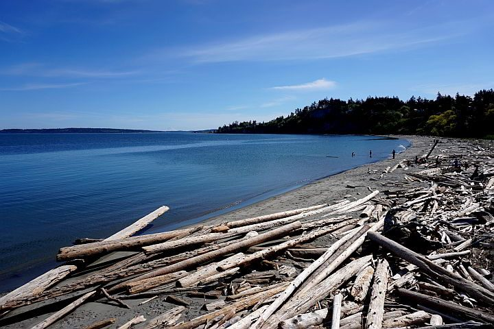 Driftwood along the beach at Fort Worden State Historical State Park