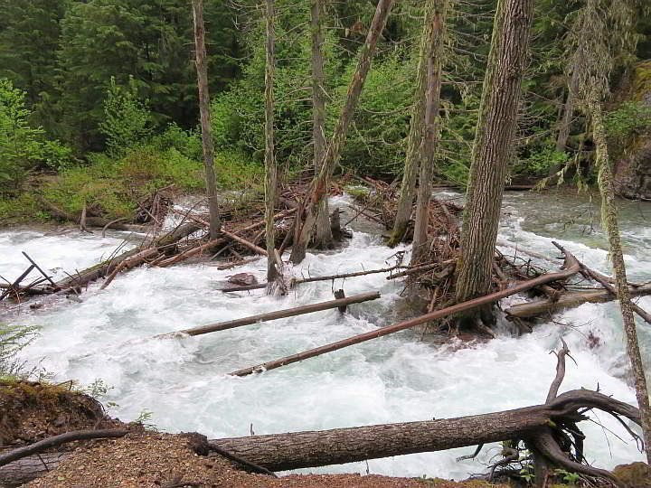 Avalanche Creek flowing rapidly during early June