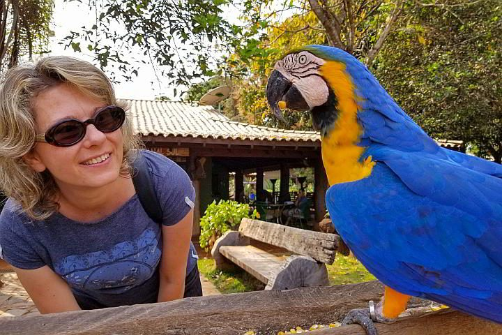 Margarita of Wildlife Diaries travel blog visiting a parrot in Southern Pantanal Brazil