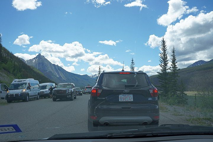 Cars line up in a traffic jam due to a bear sighting along Maligne Lake Road in Jasper