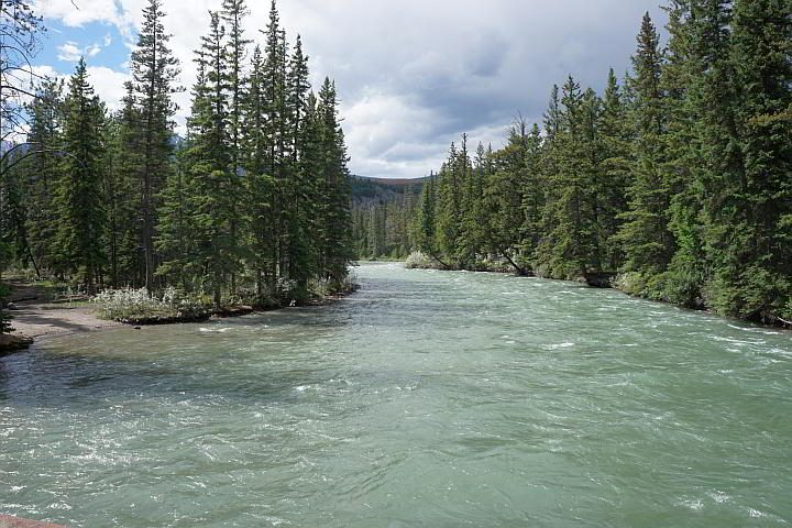 The view of the tree lined Maligne River from 6th Bridge