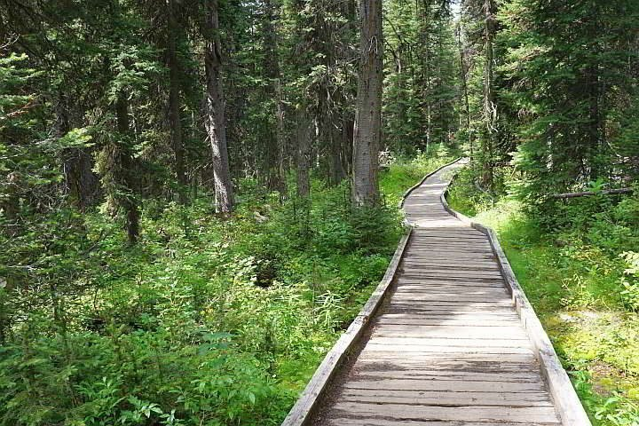 Boardwalk Boom Lake trail Banff AB
