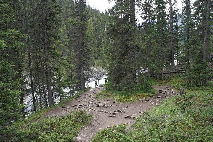 Forest along the river at Mistaya Canyon Trail Banff