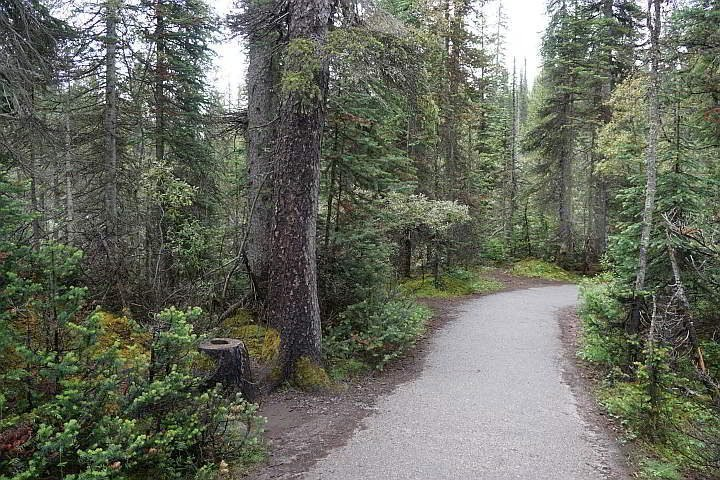 Paved walkway to Takakkaw Falls Yoho