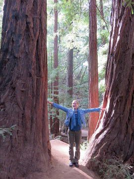 Big Redwood Trees Muir Woods California