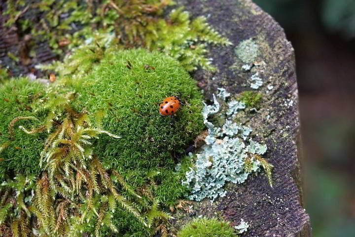 A lone ladybug atop a moss covered fence post