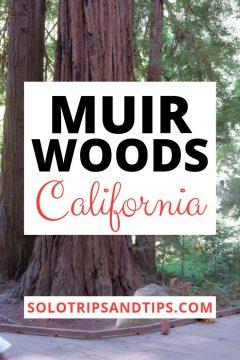 Muir Woods California SoloTripsAndTips.com