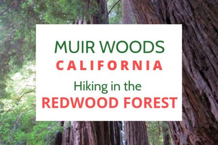 Muir Woods Hike the Redwood Forest Marin County California Coast