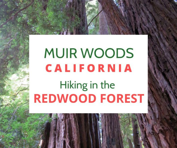 Muir Woods hike in the California redwood forest
