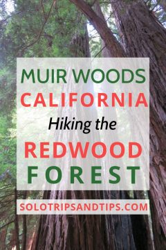 Muir Woods California hiking the redwood forest