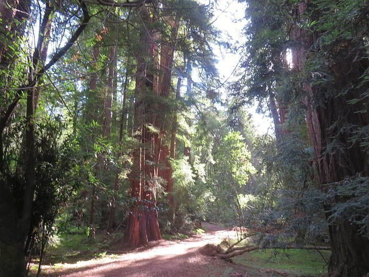 Muir Woods hiking trail through the coast redwood forest