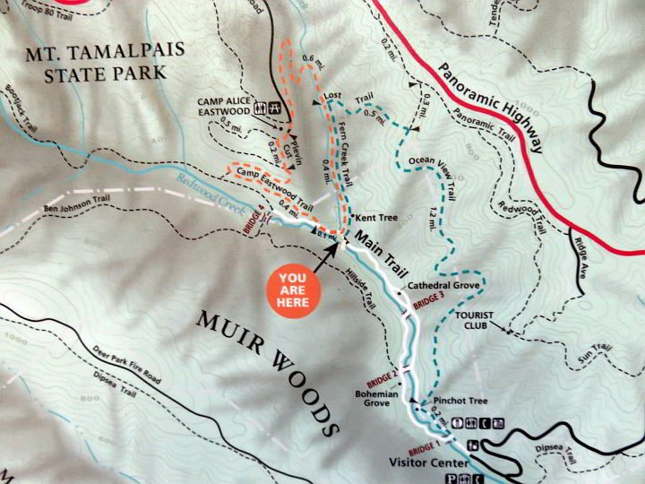 Muir Woods hiking trails map