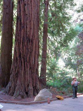Muir Woods redwoods talk