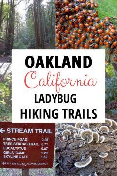 Oakland California ladybug hiking trails