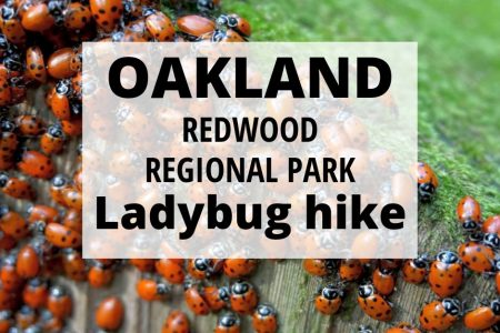 Ladybug Hike at Redwood Regional Park Oakland California