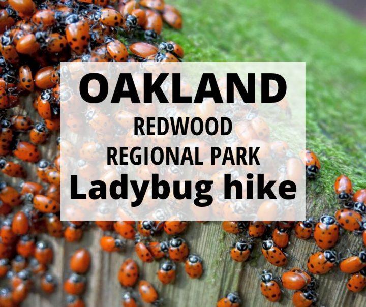 Oakland Redwood Regional Park Ladybug Hike
