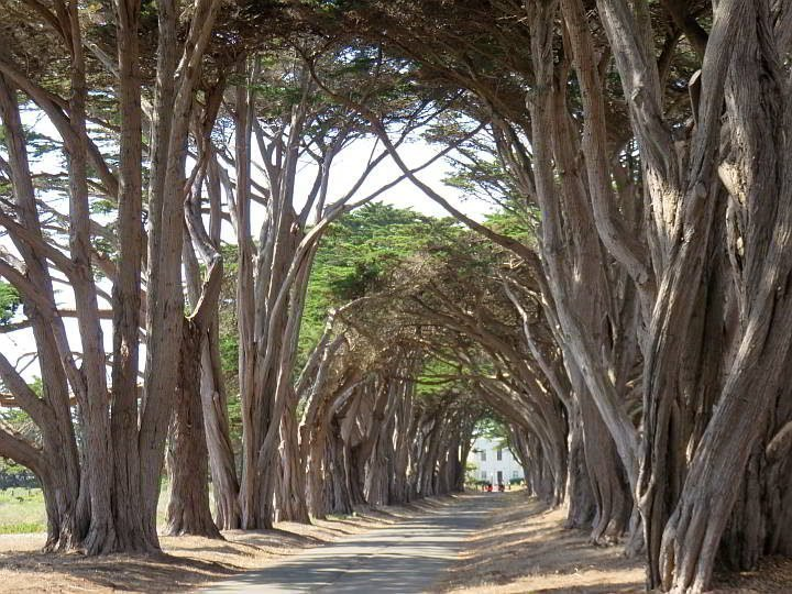 Point Reyes Cypress Tree Tunnel