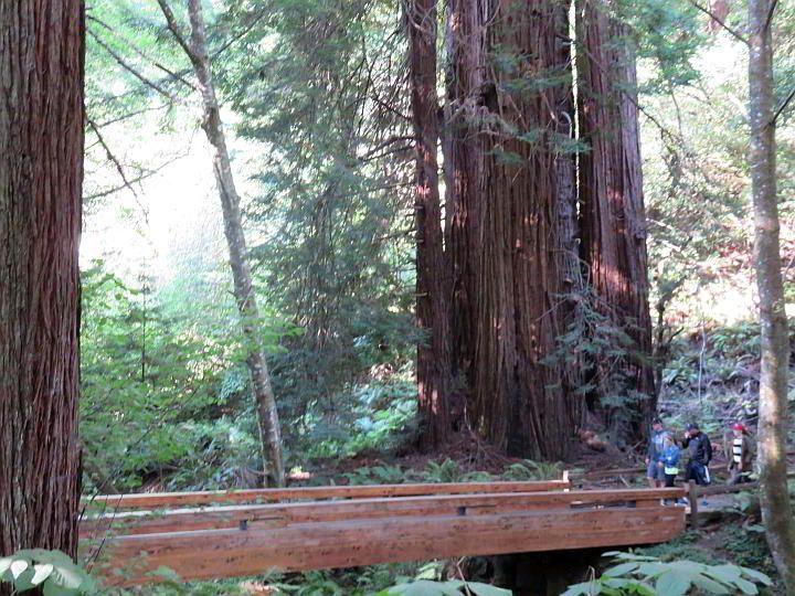 Visiting Muir Woods California redwoods