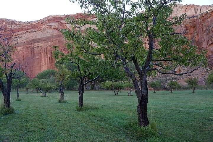 Fruita orchard Capitol Reef National Park in Utah