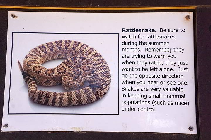 Watch out for rattlesnakes in summer