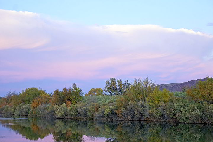 Mirror image of the foliage along the Rio Grande in Truth or Consequences New Mexico