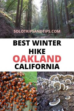 Best Winter Hike Oakland California