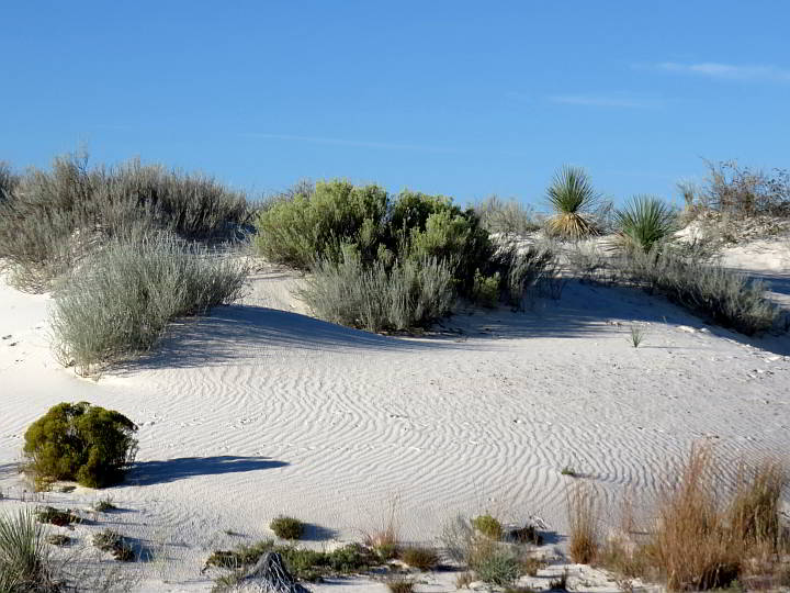 Desert plants New Mexico White Sands