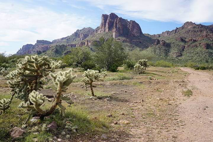 Cholla Cactus alongside trail Arizona
