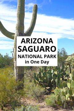 Arizona Saguaro National Park in One Day