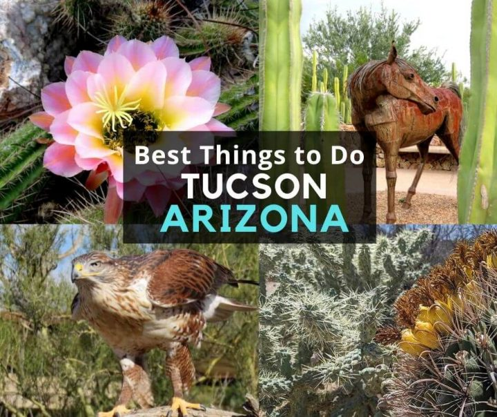 Best Things to Do Tucson Arizona