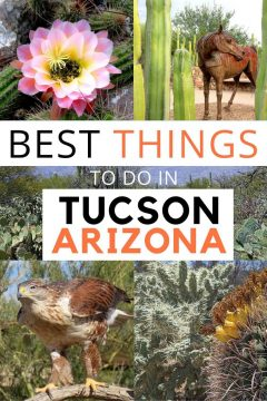 Best Things to do in Tucson Arizona