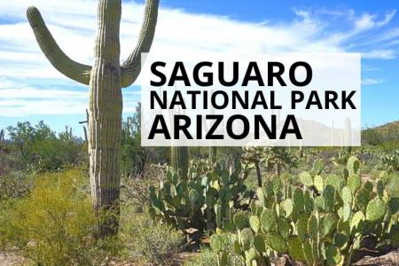 Saguaro National Park Arizona – Best Things to Do