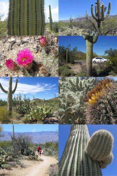 Saguaro National Park Day Trip