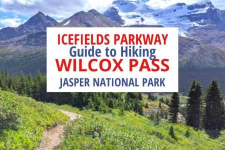 Hiking Wilcox Pass Trail Jasper National Park
