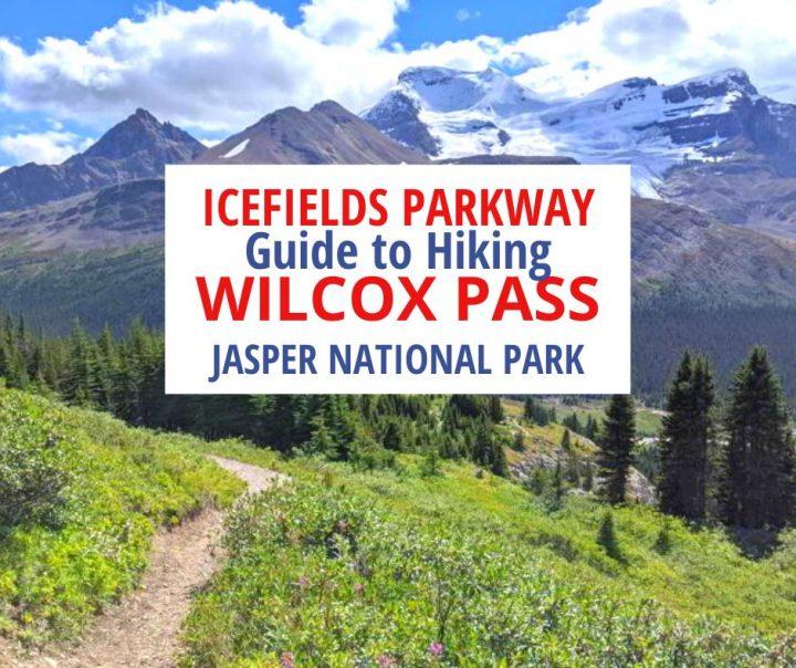 Icefields Parkway Guide to Hiking Wilcox Pass Jasper