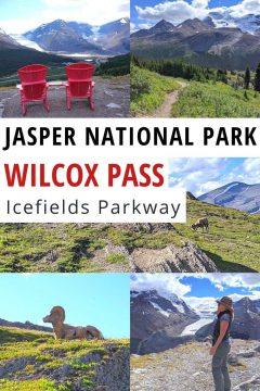Jasper National Park Wilcox Pass Icefields Parkway