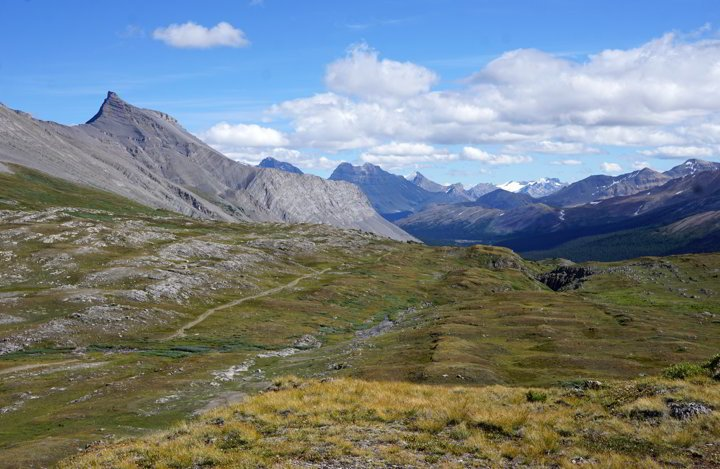 Panaramic view of mountains and meadows Wilcox Pass Jasper