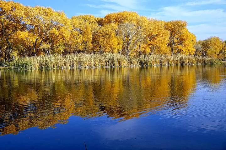 Dead Horse Ranch State Park fall leaves in yellow and orange with reflection on the lake