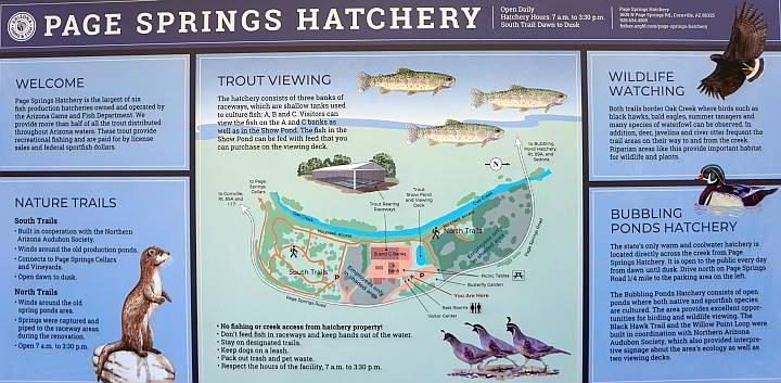 Page Springs Hatchery AZ